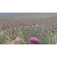 Turkish Thistles Honey, Thistle Flower Honey, Artichoke Flower Honey, Organic Honey, 500gr